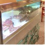 Crustaceans (StreetView)