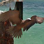 Bird In Flight (StreetView)
