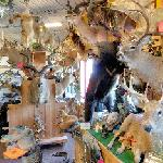 Fish & Wildlife Unlimited Taxidermy (StreetView)