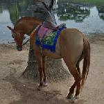 Horse in Angkor Wat Temple (StreetView)