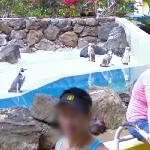 Penguins (StreetView)