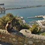 Monkey & Port of Gibraltar
