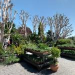 Roger's Gardens (StreetView)