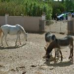 Horse and donkeys