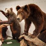 Bears in Historical Museum of Hokkaido (StreetView)