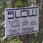 Turtle crossing...
