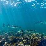 Google Maps Underwater (Cheeka Rocks)