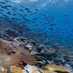 Google Maps Underwater (Ile Vache Marine)