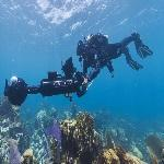 Seaview Survey diver