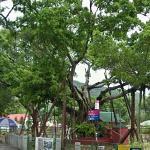 Lam Tsuen wishing trees (StreetView)