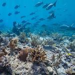 Molasses Reef