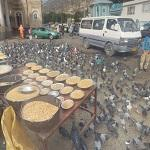 Feed the birds... (StreetView)