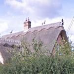 Thatchers animal sculptures on the roof (StreetView)