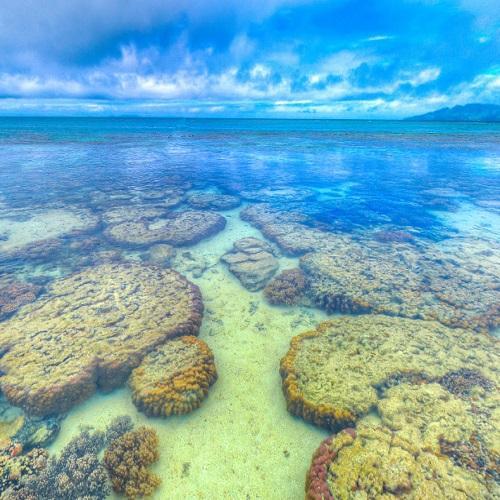 Naigani Island Fiji In Levuka Fiji Google Maps