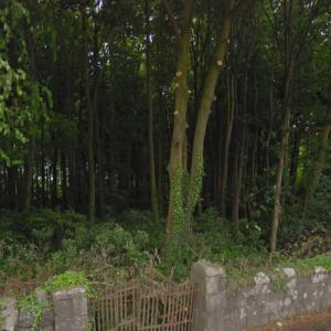 """Dream Forest (""""Game of Thrones"""") (StreetView)"""