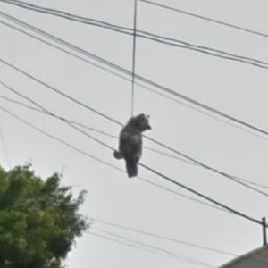 Stuffed animal just hanging around the power lines (StreetView)
