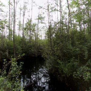 Okefenokee Swamp (StreetView)