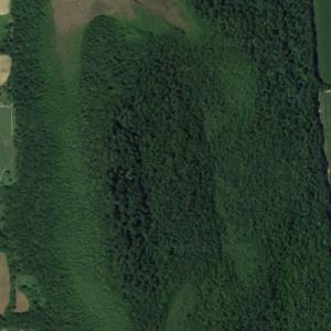 Zurich Bog (Google Maps)