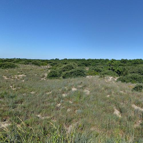First Landing State Park (StreetView)