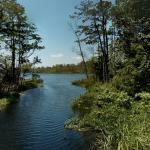 Alligator River National Wildlife Refuge