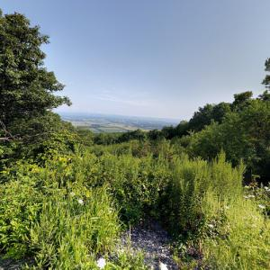 Rothrock State Forest (StreetView)