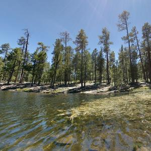 Apache-Sitgreaves National Forest (StreetView)
