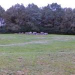 D20 Drouwen (Passage Grave)