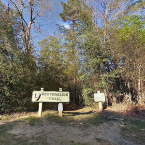 Big Thicket (StreetView)