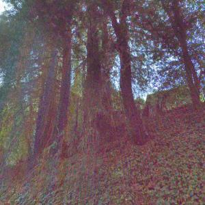 Psychedelic Forest (StreetView)