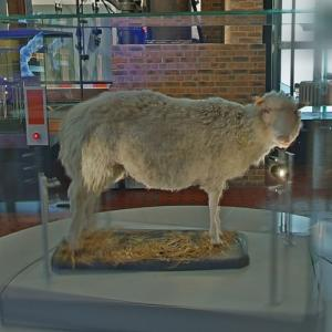 Dolly the sheep (StreetView)