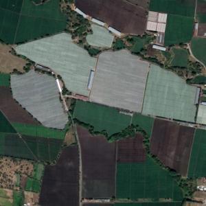 Nicaragua tobacco fields (Google Maps)