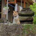 Cat on a ledge