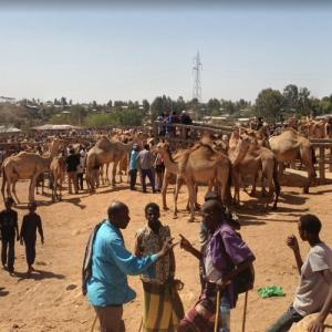 Camel Market (StreetView)