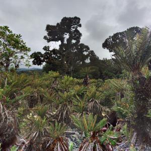 La Amistad International Park (StreetView)