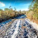 Suwannee River rapids in Florida