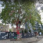 Happy Man Tree (cut down)