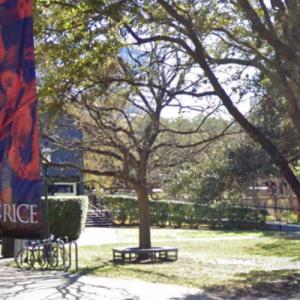 'Oak Tree' by Andy Warhol (StreetView)