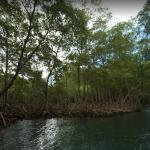 Mangroves in Los Haitises National Park