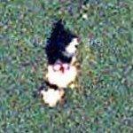 Thomas Point Shoal Light (Google Maps)