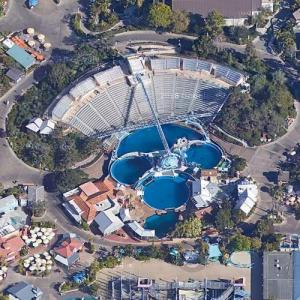 'Dolphin Discovery' show at Sea World (Google Maps)