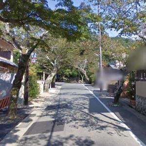 Sakura (Cherry blossom) alley (StreetView)