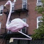 Giant Pink Flamingo (StreetView)