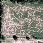 Corn Maze (Google Maps)