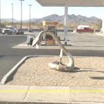 Rattlesnake (StreetView)