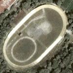 Serdika Velodrome (Google Maps)