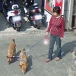 Walking the dogs (StreetView)
