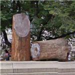 Petrified wood (StreetView)