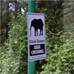 Deer (?) crossing