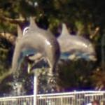 Performing Dolphins (StreetView)