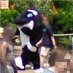 Walking with a killer whale (StreetView)